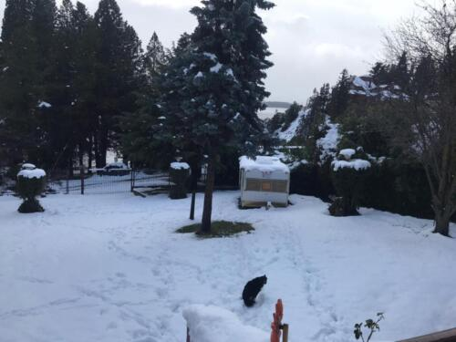 La Casona Hostel Bariloche - Parque con nieve en Invierno